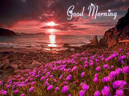 Free Best Happy Good Morning Photo Pictures Download