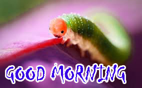 Good Morning Sites Images Pics Download