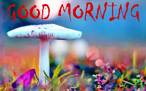 Good Morning Sites Images Photo Download