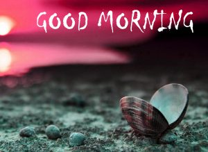 HD Good Morning Images Photo Picture Download