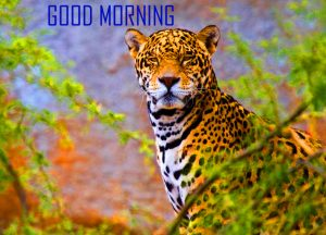 Animal Good Morning Images Wallpaper Download