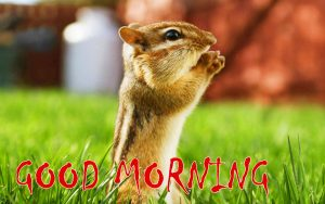 Good Morning Status Images Free Download