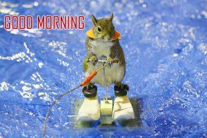 Animal Good Morning Images Wallpaper HD
