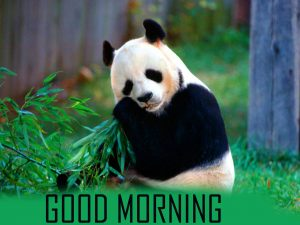 Animal Good Morning Images Photo Pics HD