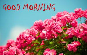 Good Morning Status Images With Flower