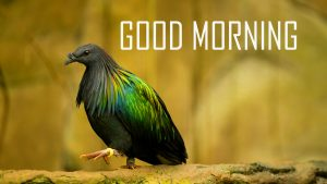 Animal Good Morning Images Pics Free Download