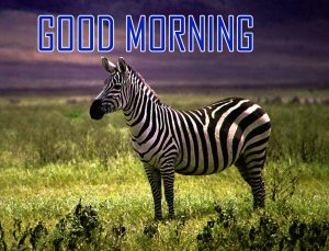 Animal Good Morning Images Photo Pics HD Download