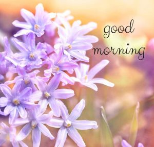 HD Good Morning Images Pictures Free Download With Flower