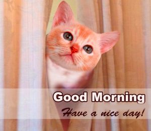 Cute Good Morning Images Pictures free Download