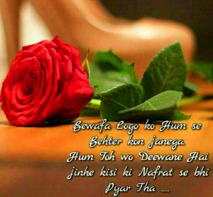 Hindi Shayari Bewafa Images Photo Pics With Red Rose