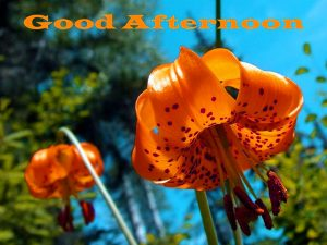 Good Afternoon Images Wallpaper With Flower