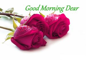 Wife good morning Images Photo Pics With Red Rose