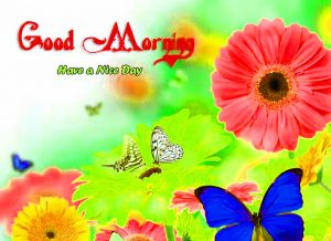 HD Good Morning Images Photo Wallpaper With Flower