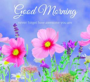 HD Good Morning Images Photo Pics With Flower