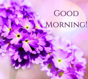 HD Good Morning Images Photo Pictures With Flower
