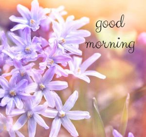 HD Good Morning Images Photo Pics Download