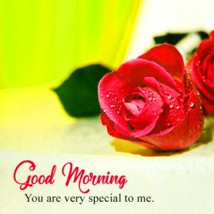 HD Good Morning Images Wallpaper Pics With Red Rose