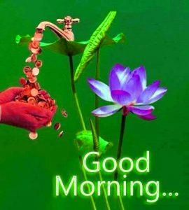 HD Good Morning Images Photo Wallpaper Pics Download