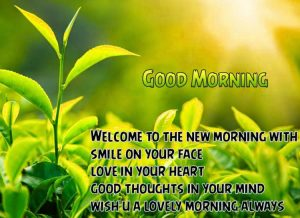 Whatsaap & Facebook Good Morning Images Photo Pictures Free Download