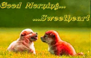 Cute Good Morning Images Photo Pics Free Download