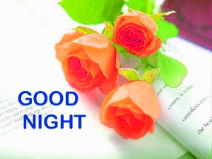 Romantic Good Night Images Photo Pictures Wallpaper With Red Rose