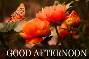 HD Good Afternoon Pictures Download