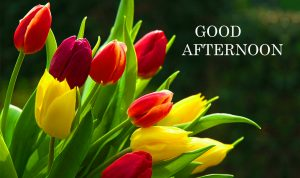 Good Afternoon Images Photo Pictures HD Download