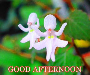 Good Afternoon Images Photo Pics Download