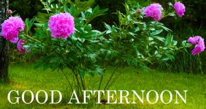 Good Afternoon Images Pics HD Download