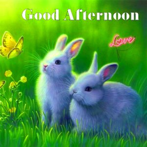 Good Afternoon Images Photo Pics HD Download