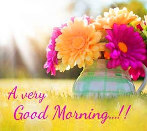HD Good Morning Images Photo Pictures For Flower