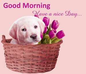 Cute Good Morning Images photo Pictures Free Download