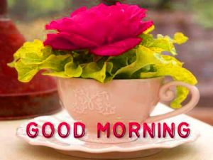Good Morning Quotes In Hindi Font Images Photo Pictures With Red Rose