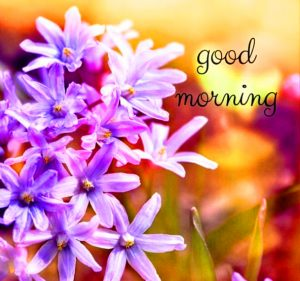 Saturday Good Morning Images Photo Pics With Flower