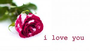 Love Couple I love you for husband Wife Images Pictures With Red Rose