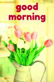 HD Good Morning Images Wallpaper Pics HD Download
