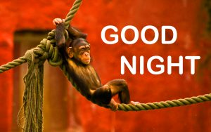 Funny Good Night Images Photo Pics Download