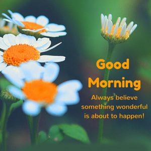HD Good Morning Images Photo Pics HD Download