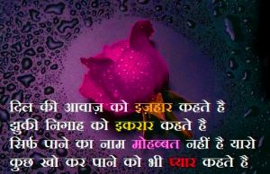 Hindi Shayari Images Photo Pics Free Download With Red Rose
