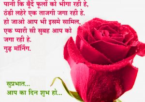 Good Morning Quotes In Hindi Font Images Wallpaper With Red Rose