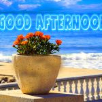 222+ Good Afternoon Images Photo HD Download