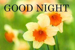 Good Nite Images Photo Pictures With Flower