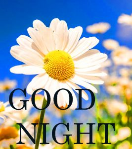 Good Nite Images Photo Pictures Free Download