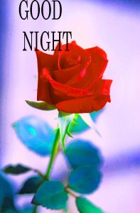 Good Night Images Photo Pictures Download With Red Rose