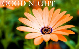 Gud nyt Images Photo Wallpaper Pics With Sunflow
