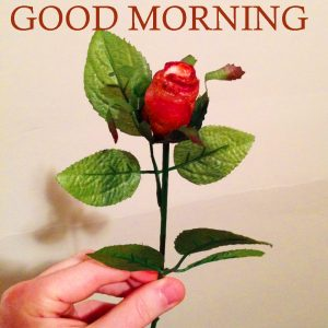 Boyfriend Romantic Good Morning Photo Pics With Flower
