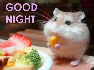 Cute Good Night Images Photo Pictures Free Download