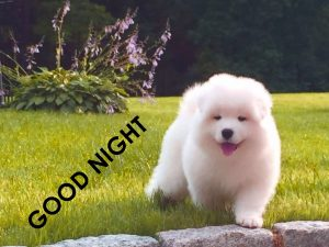 Cute Good Night Images Wallpaper Pics In HD Download