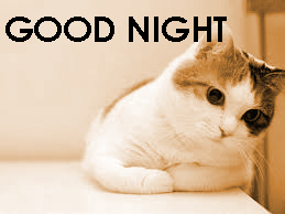 Cute Good Night Images Photo Pics Free Download