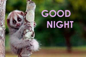 Cute Good Night Images Photo Pics HD Download
